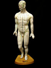 großes Akupunktur-Modell MANN 45 cm mit Punkten & Meridianen XL Lehrmodell NEU