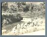 Italia, Capri, Un giorno di lavaggio  Vintage silver print. Italy  Tirage arge