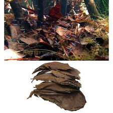 10x Indian Almond Leaves Terminalia Catappa Dried Naturally Leaf for Fish