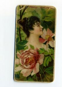 1892 N75 W. Duke and Sons Floral Beauties of the World Peony Archness