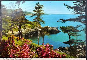 Postcard ~ Pine Forest, Jerbourg, Guernsey ~ John Hinde Ltd ~ Posted 1989