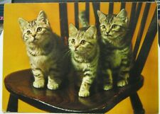 Postcard Animal Cat Kittens on a chair - unposted marked