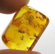 Genuine amber stone Plant Hopper, Beetle Fly,Spider fossils insects inclusion