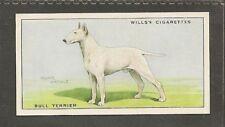 Rare 1937 UK Arthur Wardle Dog Art Wills Cigarette Card WHITE BULL TERRIER