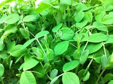 4 OUNCES OF ORGANIC UNTREATED SPECKLED SWEET PEA SEEDS - AMAZING MICRO GREENS!!