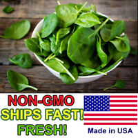 150+ Spinach Seeds Giant Nobel | Non-GMO | Fresh Vegetable Garden Seeds