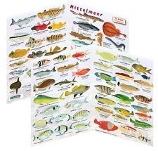 Fischfaltblatt Mittelmeer Fischbestimmungskarte Faltblatt zur Fischbestimmung