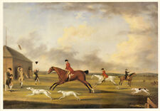 GREYHOUND COURSING HORSE DOG FINE ART PRINT Hounds at Newmarket 1762 Sartorius L
