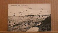 Postcard unposted Sussex, Brighton, Sea gulls off west pier