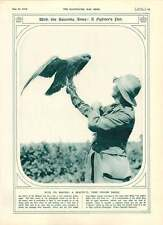 1916 British Oficer Balkans Salonika Tame Golden Eagle