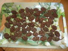 56 small to medium natural fir cones for crafting/floristry