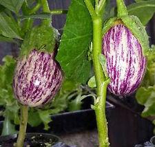 Aubergine Shooting Stars - 50 Seeds - Eggplant