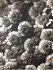 1942 FOTO ORIGINALE STAMPA ROTOCALCO PIASTRA 32. Karl Blossfeldt astratto botanico