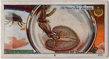 Blowfly Feeding Mechanism Magnified 30 X 1920s Trade Ad Card 00004000