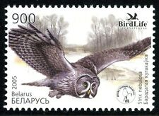 2005. Belarus. Bird of the year. OWL. Sc.548. MNH