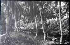 JAMAICA~1900's Ferry River - near Spanish Town
