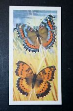 Gaudy Commodore    African Butterfly   Illustrated Colour Card  VGC