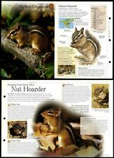 Eastern Chipmunk #111 Mammals - Discovering Wildlife Fact File Fold-Out Card