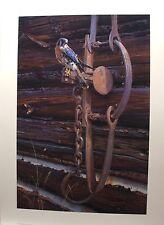 """Daniel SMITH LTD art print """" Frontier Memory """" Kestrel MINT in folder COA AP"""