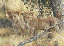 Carl Brenders YOUNG EXPLORERS, young lions giclee canvas ARTIST PROOF A/P#2/18