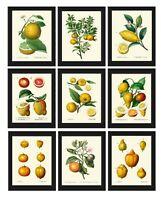 Unframed Citrus Botanical Print Set of 9 Antique Lemons Wall Art Home Decor