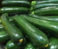 15 Samen Grüne Lange Zucchini Cucurbita pepo Zucchinisamen