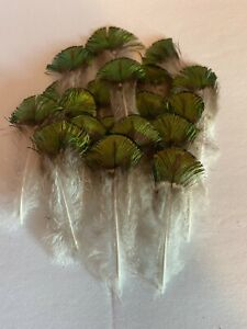 """25 Peacock Feathers metallic green/gold plumage 1""""-3"""" feathers"""