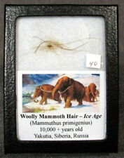 Woolly Mammoth Hair #40