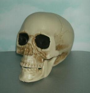 Life Size Human Skull Plastic Replica Bonehead - Man Cave Decor Accessory Prop