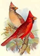 Cardinals~counted cross stitch pattern #1305~Animals Birds Nature Graph Chart