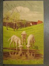 cpa fantaisie moutons agneaux buvant paysage