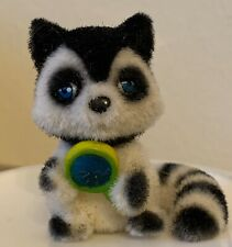 Jungle in My Pocket—Rainforest Raccoon with Lollipop