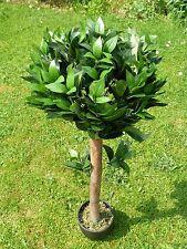 Plantas Artificiales - 0.9m 3ft 90cm árbol Interior Oficina Buxus Bay casa Maceta