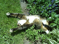 150 graines  VERITABLE HERBE A CHAT (Nepeta Cataria)A790 CATNIP SEEDS SAMEN SEMI