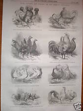 Anerley prize Poulty exhibition prints of birds 1856