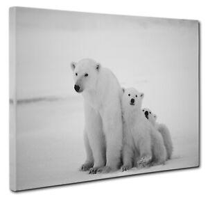 Polar Bear Canvas Print Wall Art CANVAS PICTURE PRINT Large & Small
