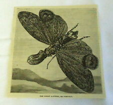 1882 magazine engraving ~ The Great Lantern, Or Fire-Fly