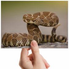 "Western Rattlesnake Reptile Small Photograph 6"" x 4"" Art Print Photo Gift #2278"