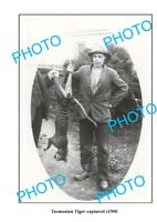 OLD LARGE PHOTO FEATURING TASMANIAN TIGER AFTER BEING CAPTURED c1900
