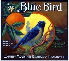 Highgrove Blue Bird Bluebird Orange Citrus Fruit Crate Label Art Print