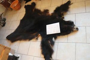 Schwarzbärfell Schwarzbär Fell hides Cites  ursus americanus  Indianer Kanada