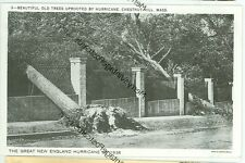 CHESTNUT HILL, MASSACHUSETTS-HURRICANE 1938-OLD TREE UPROOTED--(MASS-C)