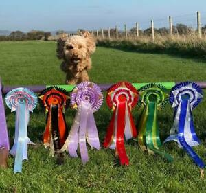 Large rosette with points. Best satin  ribbon, Championship grade. Personalised