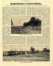 Geheimrat Dr. Paasche Baumwollkulturen in Deutsch-Ostafrika Roden am Rufiji1907