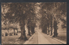 Hampshire Postcard - Winchester Cathedral Avenue  RS14378