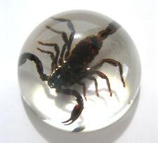 Scorpion Specimen Acrylic Half Dome Paperweight Oddities Desk Decor