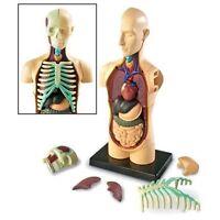 Human 4D Body Torso Anatomy Model Organs science Biology Medical 3D Model/Puzzel