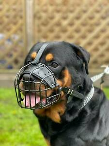 Strong Metal Rubber Coated Wire , Basket Dog Muzzle Rottweiler Mastiff  &  other