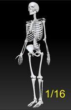 1:16 scale Skeleton resin kit .