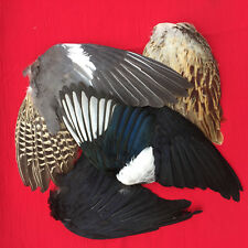 Wild bird feathers six x wings art craft hats fashion design crow fishing